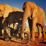 Το Adventure Roads ταξιδεύει την Africa Twin της Honda στο νότιο ημισφαίριο.